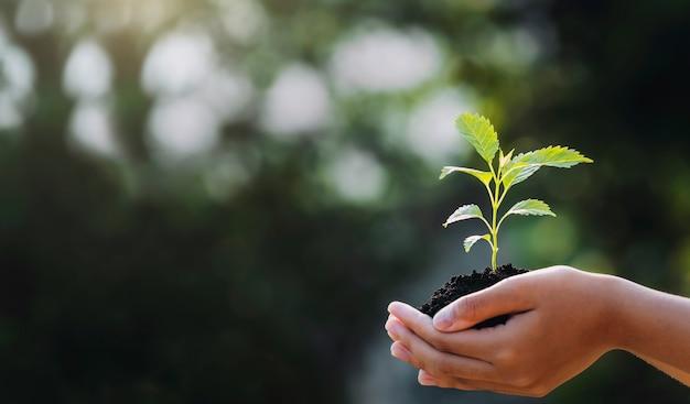 Hand, die junge pflanze mit sonnenlicht auf grüner natur hält