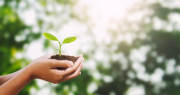 Hand, die jungen baum für das pflanzen des hintergrundes hält