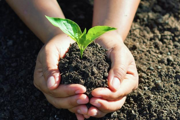 Hand, die jungen baum für das pflanzen hält.