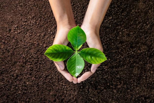Hand, die jungpflanze auf boden hält