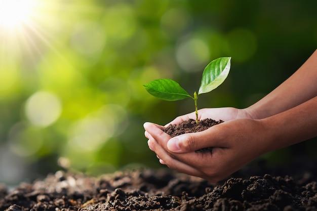 Hand, die jungpflanze für das pflanzen hält. konzept grüne welt