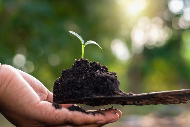 Hand, die kleinen baum für das pflanzen im garten hält