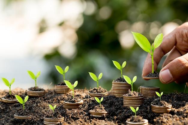Hand, die münze auf münzstapel wachsendes diagramm mit grünem bokeh, investitionskonzept setzt.