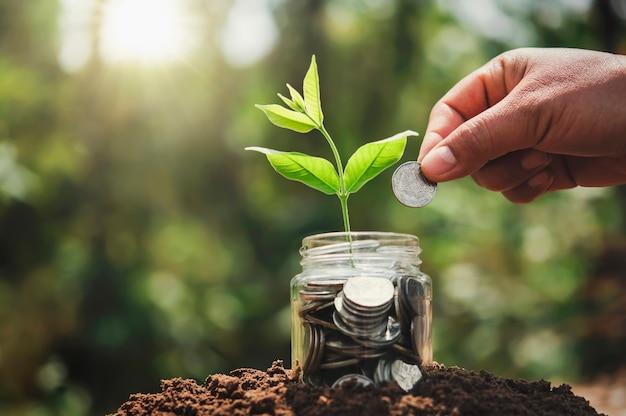 Hand, die münzen in krugglas mit pflanze, die auf geld wächst, setzt. konzept spart finanz- und rechnungswesen