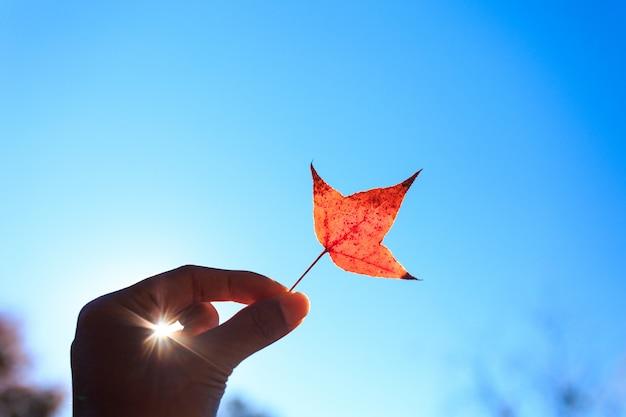 Hand, die orange autumn maple leaf against blue sky hält