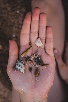 Hand, die schöne muscheln im strand hält
