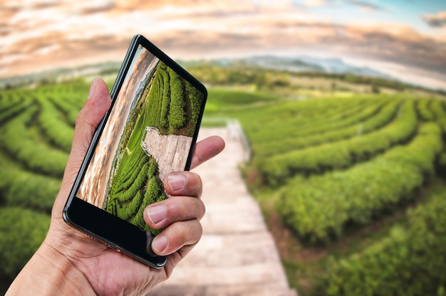 Hand, die smartphonelandschaftsnaturhintergrund hält