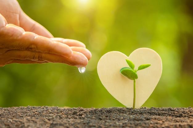 Hand, die wasser dem jungen grünen spross gibt, der im boden und im hölzernen herzsymbol auf sonnenlicht im freien und in der grünen unschärfe wächst. liebesbaum, welt retten oder wachstums- und umweltkonzept