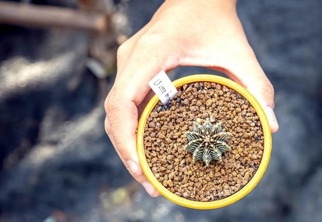 Hand einer frau, die einen kaktustopf hält nahaufnahme einer gärtnerin, die sukkulenten in eine glasvase verpflanzt, um ein botanisches florarium zu schaffen.