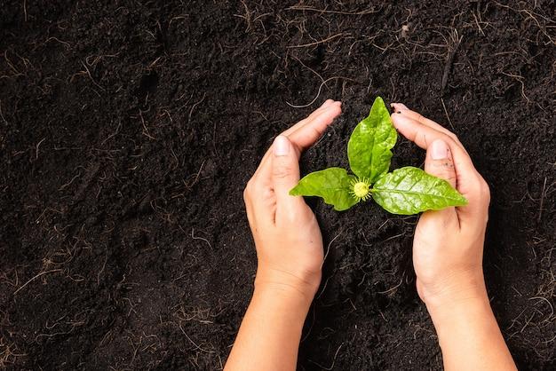 Hand einer frau, die grünes kleines pflanzenleben auf kompostiertem fruchtbarem schwarzem boden mit pflegendem baum wächst pflanzt