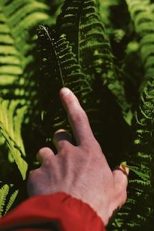 Hand einer person auf schönen grünen blättern in einem wald