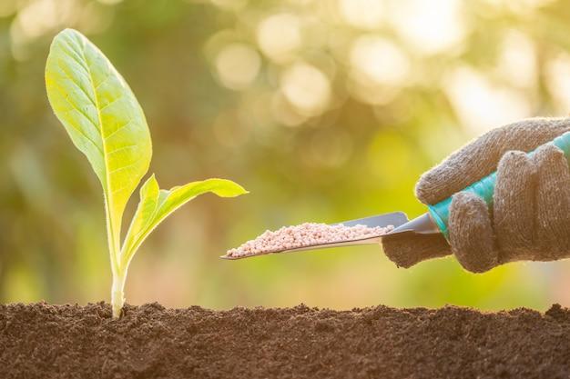 Hand geben dünger zu jungen grünen sprossen, die im boden auf grünem naturunschärfehintergrund wachsen.