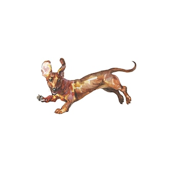 Hand gezeichneter dackel, deutscher dachshund. realistisches haustierporträt des aquarells auf weißem hintergrund.