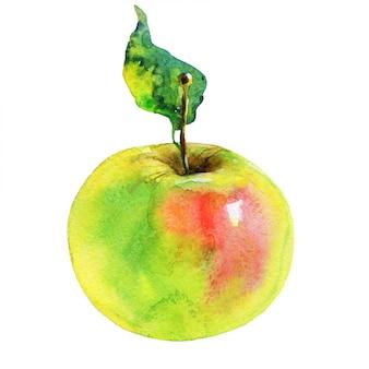 Hand gezeichneter grüner apfel. aquarell frisches obst isoliert. malerei lokalisierte illustration
