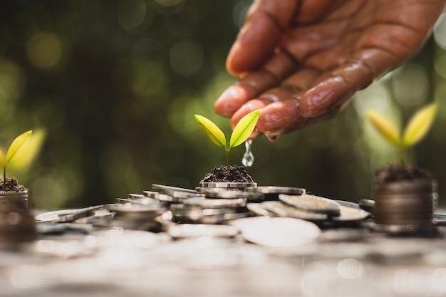 Hand gießen wasser auf münzenstapel und kleine pflanzen