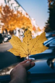 Hand hält ein großes goldenes ahornblatt