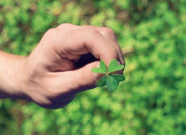 Hand hält ein grünes blatt des klees