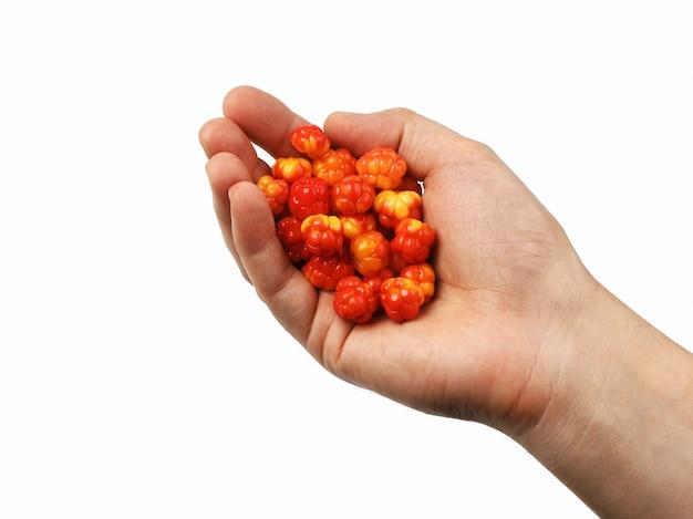 Hand hält eine handvoll beeren moltebeere