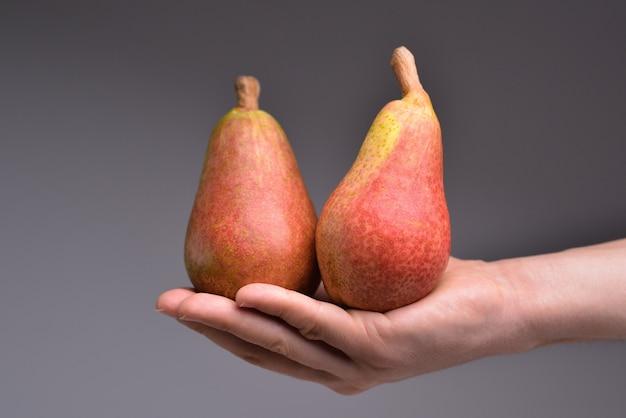 Hand hält frische bio-birnen isoliert auf grauem hintergrund bio-obst für lebensmittel oder birnensaft