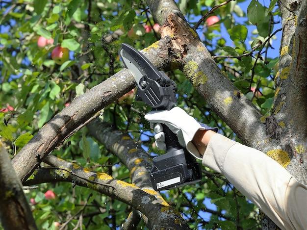 Hand hält kettensäge mit batterie, um gebrochenen zweig des apfelbaums zu trimmen