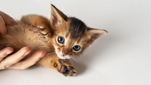 Hand hält kleines kätzchen