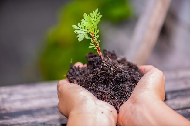 Hand hält pflanze einen baum aus thailand land