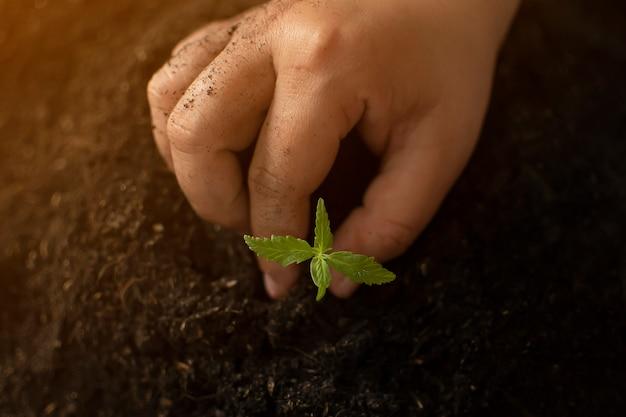 Hand hält sanft reichen boden für seine marihuana-pflanzen
