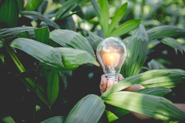Hand halten glühbirne, energiequellen für erneuerbare, natürliche energie und lieben das weltkonzept.