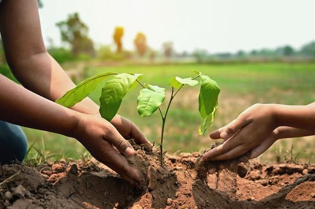 Hand hilft beim pflanzen des baumes im garten