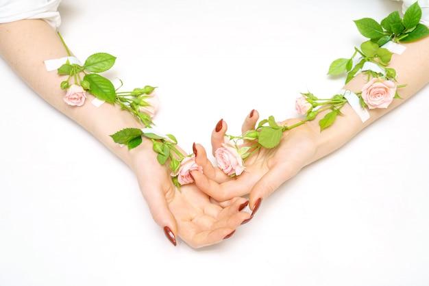 Hand in hand rosa rosenknospen auf händen, auf weißem hintergrund, isolator, handhautpflegekonzept.