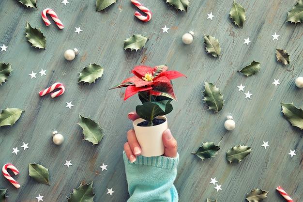 Hand in türkis pullover hält weihnachtsstern, weihnachtsstern blumentopf. hölzerner hintergrund verziert mit stechpalme, zuckerstangen und weißen kugeln.