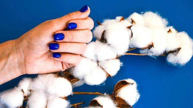 Hand mit blauen nägeln mit baumwollpflanze auf blauem hintergrund. weibliche maniküre. glamouröse schöne maniküre. selbst- und hautpflege.