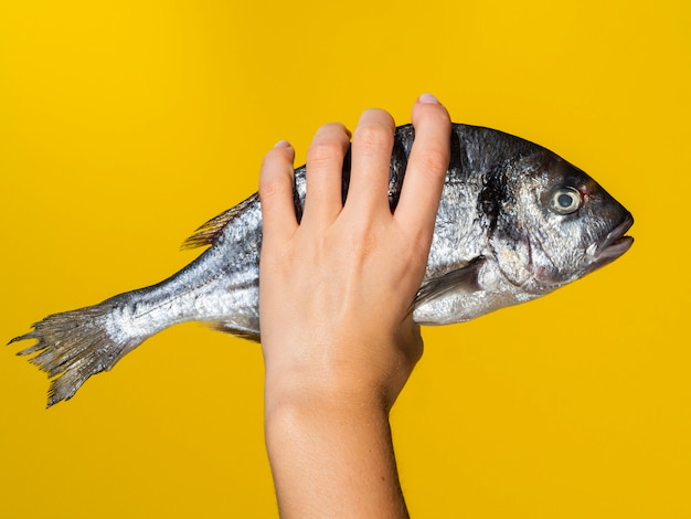 Hand mit frischen fischen auf gelbem hintergrund