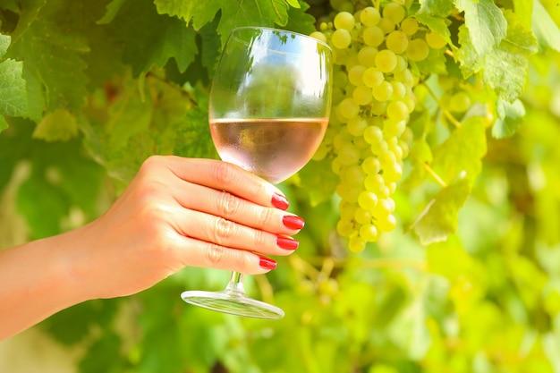 Hand mit roter maniküre, die ein roséweinglas am weinberg hält