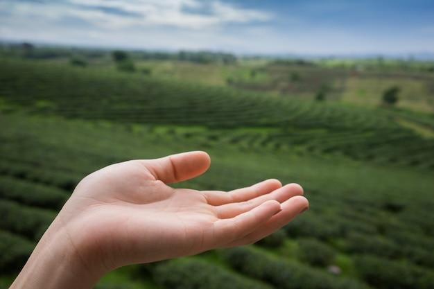 Hand mit teeplantage mit bewölktem himmelhintergrund