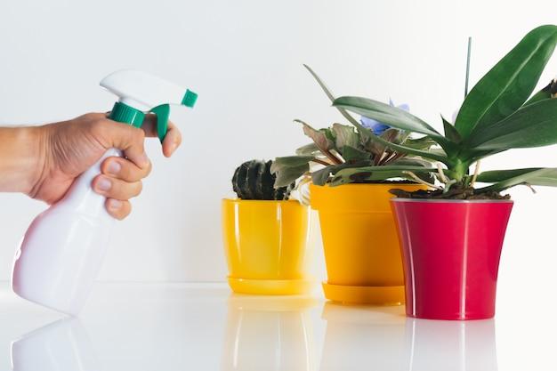 Hand mit wasserspray und pflanzen in gelben und roten töpfen