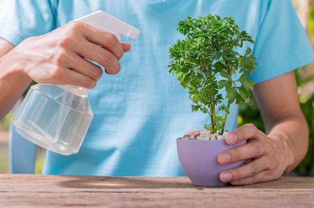 Hand mit wassersprühgerät der pflanzen im topf
