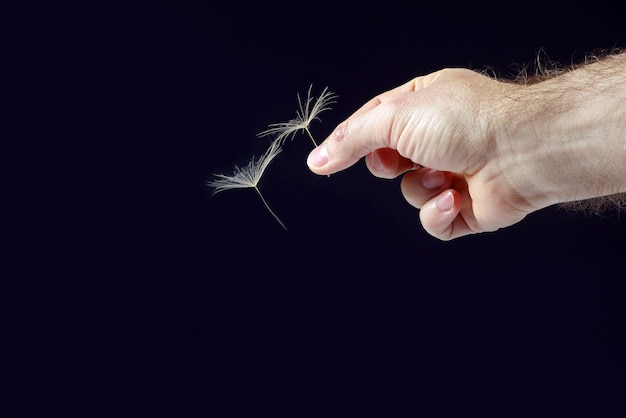 Hand mit zwei fliegenden löwenzahnsamen auf dunkelheit