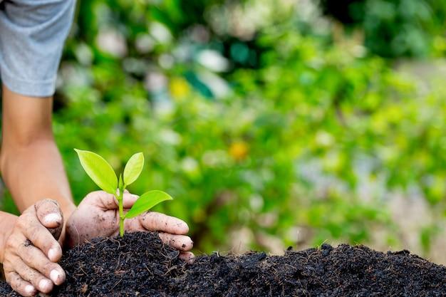 Hand pflanzt junge pflanze auf erde, natürliche energie und liebt das weltkonzept.