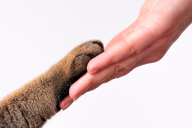 Hand und pfote einer katze auf einem weißen hintergrundfreundschaftskonzept