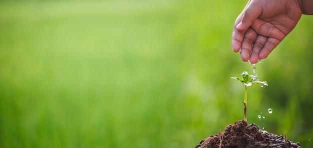 Hand wächst und pflegt baumsprossen, die auf fruchtbarem boden mit grünem hintergrund wachsen, csr-konzept