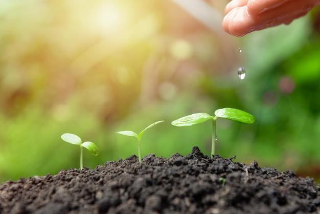 Hand wartering kleine pflanze auf verschwommenem grün