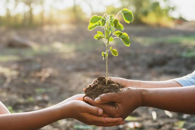 Hand zwei, die junge für das pflanzen im garten hält. konzept welt retten
