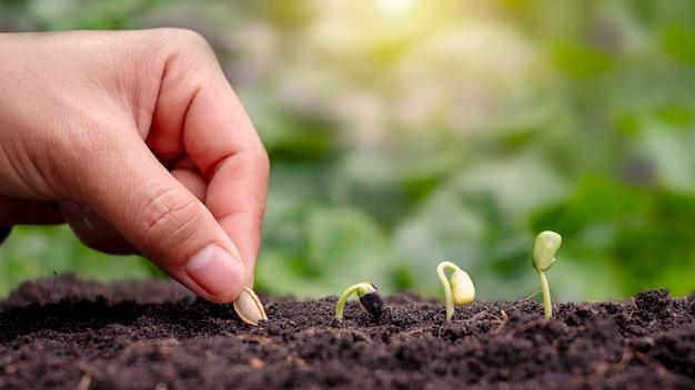 Handbepflanzung mit samen und bäumen, die in der reihenfolge der keimung in den boden gepflanzt werden. pflanzenwachstumskonzept