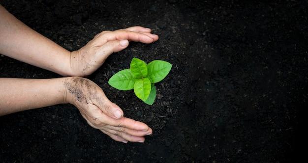 Handbewässerung pflanzt baumberggrün
