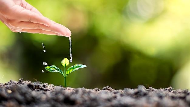Handbewässerung von pflanzen, die auf qualitativ hochwertigen böden in der natur wachsen, pflanzenpflege und baumzuchtideen.