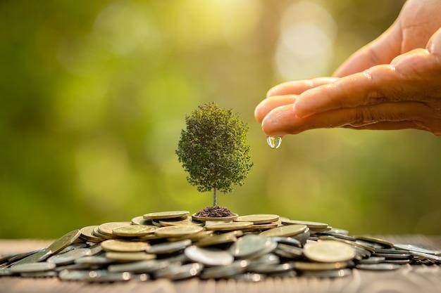 Handbewässerung zu kleinem baum oben auf münzstapel. geschäftserfolg, finanzielles oder geldwachsendes konzept