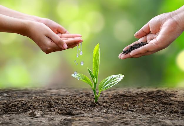Handbewässerungspflanzen. weibliche hand, die baum auf naturfeldgras-waldschutzkonzept hält