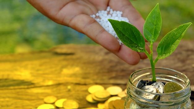 Handdüngemittelpflanze, die aus münzen im glas heraus wächst spart geld