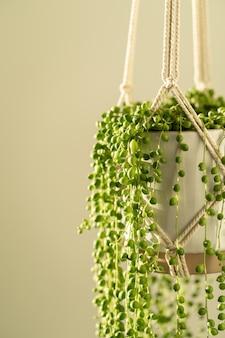 Handgemachter baumwoll-makramee-pflanzer für zimmerpflanzen senecio rowleyanus. liebe pflanzen